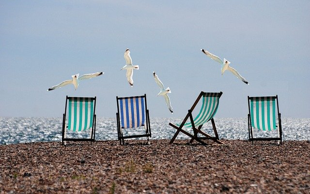 A group of bird on a beach