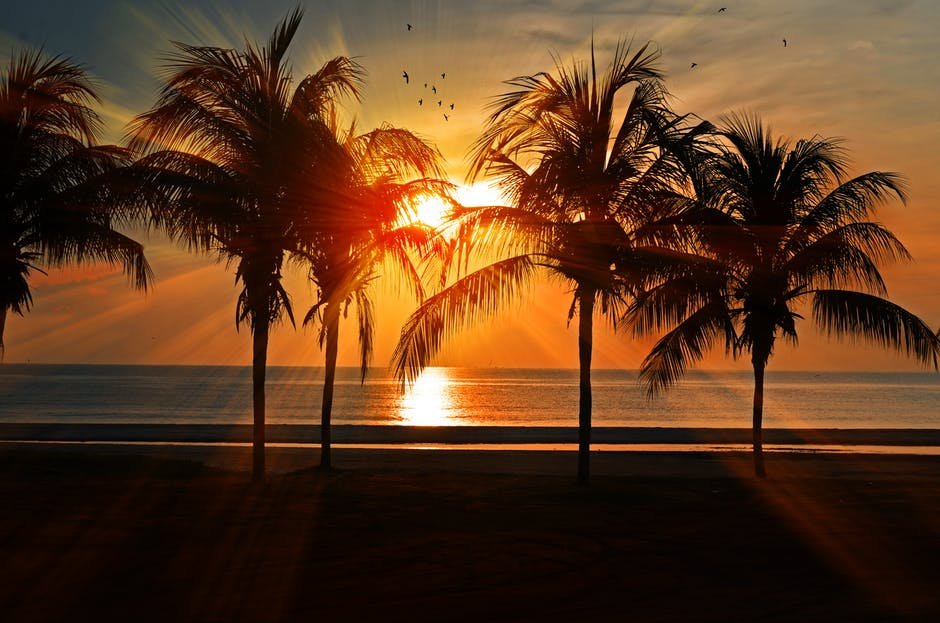 A sunset over a beach with a palm tree
